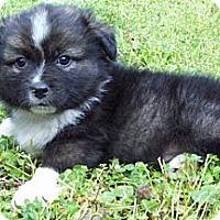 Adopt A Pet :: Zach - Chattanooga, TN