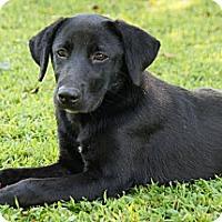 Adopt A Pet :: *Sweet Mitzi - PENDING - Westport, CT