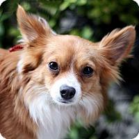 Adopt A Pet :: Todd - Woodland, CA