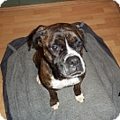 Adopt A Pet :: Komono