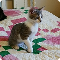 Adopt A Pet :: Claire - Chattanooga, TN
