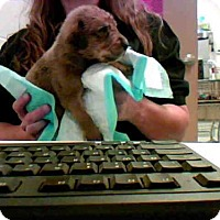 Adopt A Pet :: YELLA - Conroe, TX
