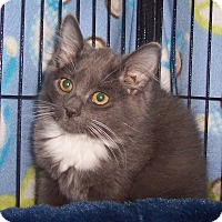 Adopt A Pet :: Nika - Richmond, VA