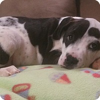 Adopt A Pet :: Groucho - New Oxford, PA
