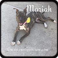 Adopt A Pet :: Mariah - Toledo, OH