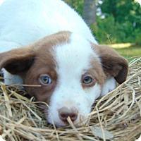 Adopt A Pet :: Echo - Marlborough, MA