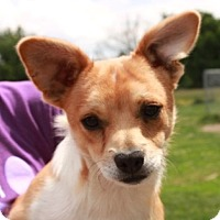 Adopt A Pet :: Hercules - Salem, NH