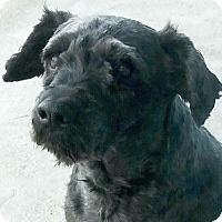 Adopt A Pet :: Bonnie-ADOPTION PENDING - Boulder, CO