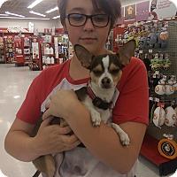 Adopt A Pet :: Rocky - Ogden, UT