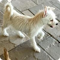Adopt A Pet :: Robin - Phoenix, AZ