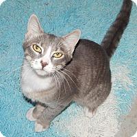 Adopt A Pet :: ALDO - AMAZING SWEET BOY! - Plano, TX