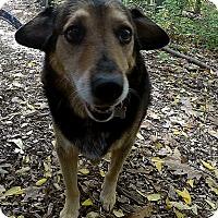 Adopt A Pet :: Ladybird - Foster needed! - Detroit, MI