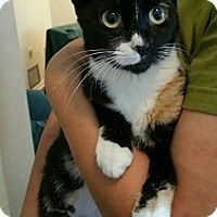 Calico Cat for adoption in Oviedo, Florida - Ruby
