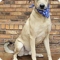 Anatolian Shepherd Mix Dog for adoption in Benbrook, Texas - Max