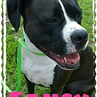 Adopt A Pet :: Fancy - Jacksonville, FL