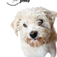Adopt A Pet :: JIMMY - Sherman Oaks, CA