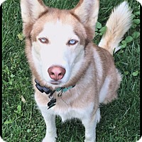 Adopt A Pet :: Keera- Adoption pending! - Monument, CO