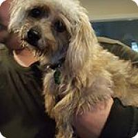 Adopt A Pet :: Bitsey - DAYTON, OH