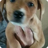 Adopt A Pet :: Cynthia (adopted) - Trenton, NJ