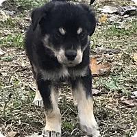 Adopt A Pet :: Electra - Palm Harbor, FL
