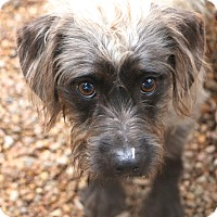 Adopt A Pet :: Sinclair - Woonsocket, RI