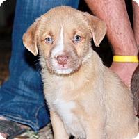 Adopt A Pet :: Hazel - Seattle, WA
