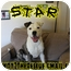 Photo 1 - American Bulldog/Labrador Retriever Mix Dog for adoption in Columbia Station, Ohio - Star