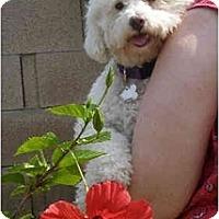 Adopt A Pet :: JoJo - La Costa, CA