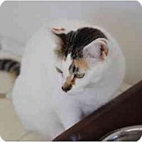 Adopt A Pet :: China Girl - El Cajon, CA