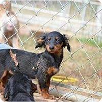 Adopt A Pet :: Huey - New Boston, NH