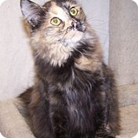 Adopt A Pet :: K-Talia1-Darcy - Colorado Springs, CO