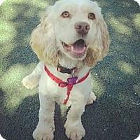 Adopt A Pet :: Kahala - Encinitas, CA