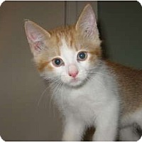 Adopt A Pet :: Archie - Portland, ME
