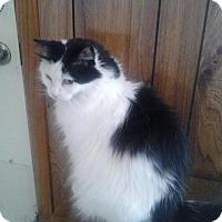 Adopt A Pet :: Hunny - Andover, KS