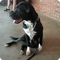 Adopt A Pet :: Jameson - Greenville, SC