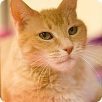 Adopt A Pet :: Timber - Grayslake, IL
