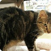 Adopt A Pet :: Joy - McDonough, GA