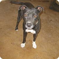 Adopt A Pet :: Connie - San Antonio, TX