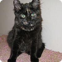 Adopt A Pet :: Tina - La Jolla, CA