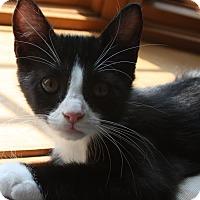 Adopt A Pet :: Kenya - Colmar, PA