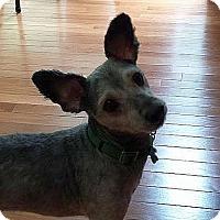 Adopt A Pet :: Wesley - Alpharetta, GA