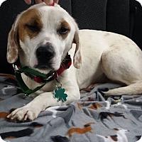 Adopt A Pet :: Hannah - Alpharetta, GA