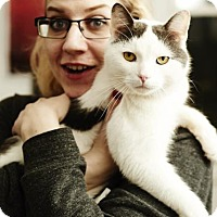 Adopt A Pet :: Biz Markie, Your Chatty Main Man! - Brooklyn, NY