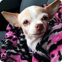 Adopt A Pet :: Paisley - Gainesville, FL