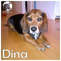 Adopt A Pet :: Dina - Novi, MI