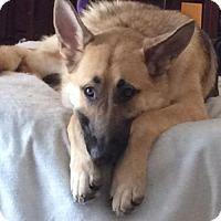 Adopt A Pet :: Esmae(CL) - Greensboro, NC