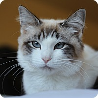 Adopt A Pet :: Pinky (applications pending) - Richmond, VA