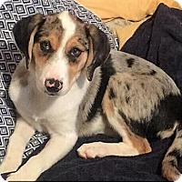 Adopt A Pet :: Gemma - Maryville, TN