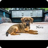 Adopt A Pet :: Nora - West Hartford, CT