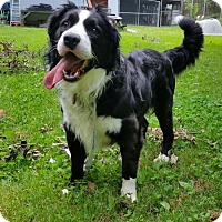 Adopt A Pet :: Kolby (Courtesy Listing from Southfield, MI) - Highland, IL